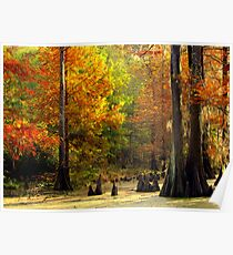 In The Swamp, Cypress Trees Poster
