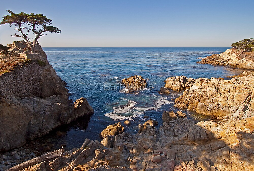 The Lone Cypress, Pebble Beach, CA by Barb White