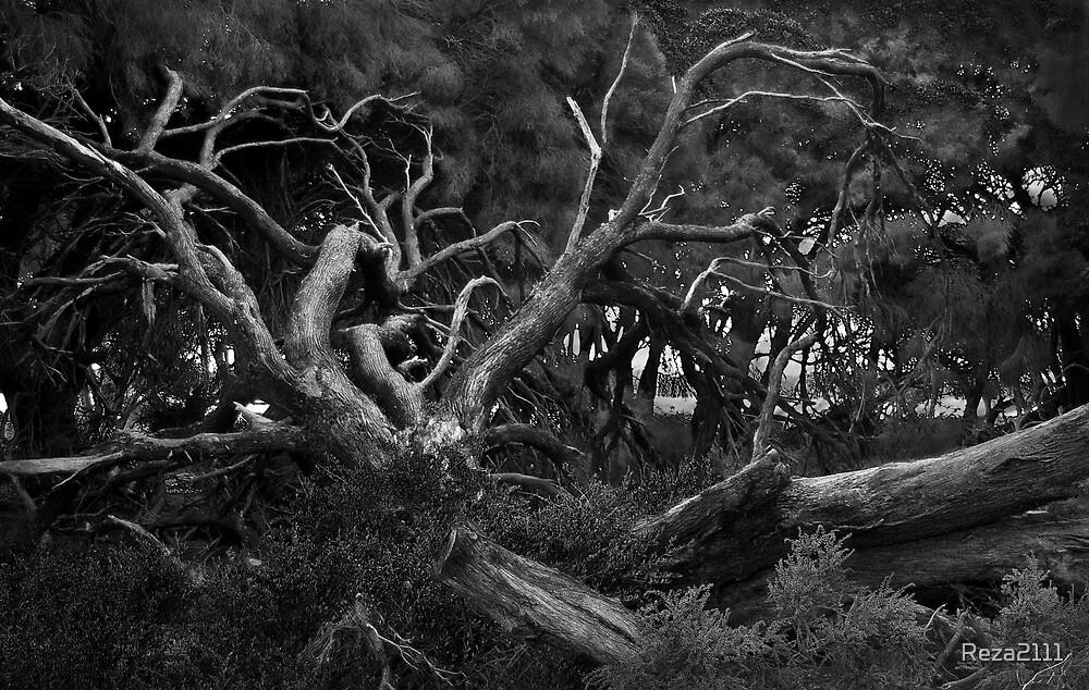 Dead Tree - Rottnest Island, Western Australia by Reza2111