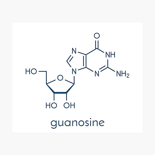 Guanosine purine nucleoside molecule Photographic Print