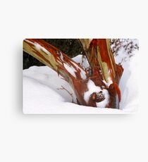 Snowgum bark trunk in snow Canvas Print