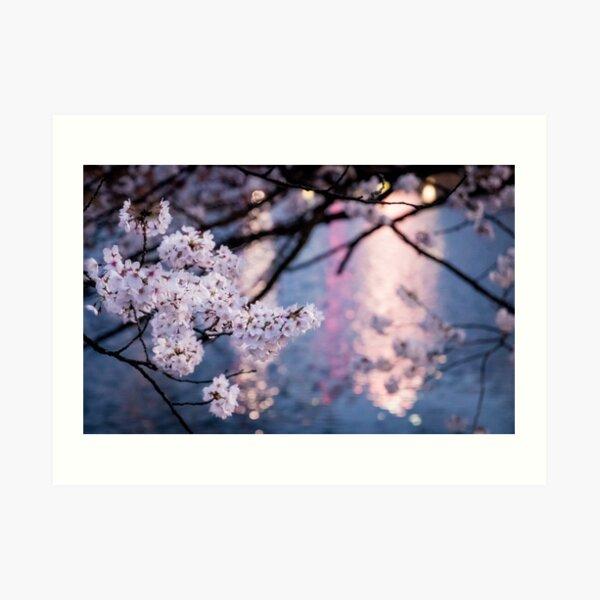 Japanese Sakura at Night Art Print
