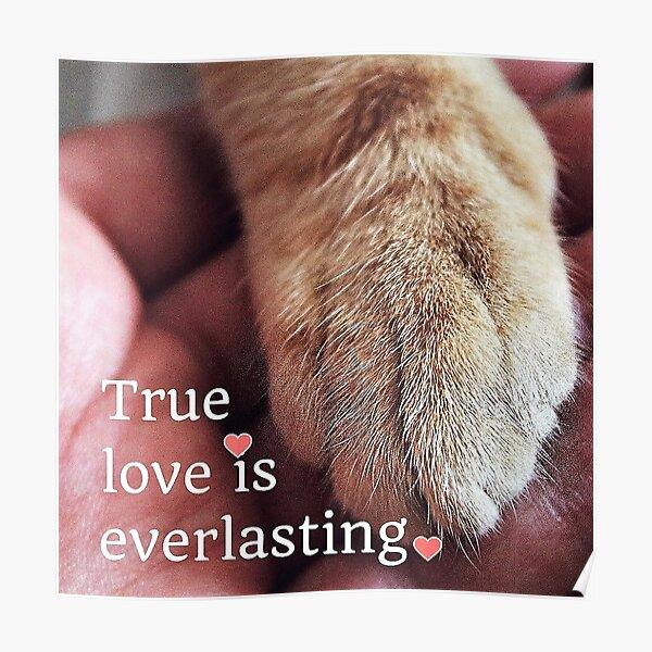 True love is everlasting. Poster