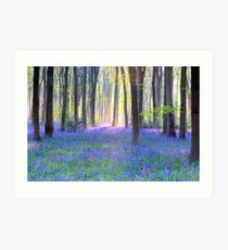 Bluebell Spring - An English Bluebell Wood in Spring Art Print