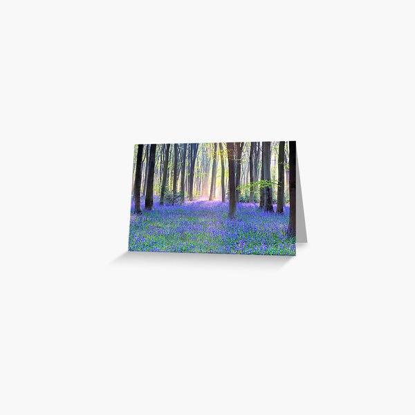 Bluebell Spring - An English Bluebell Wood in Spring Greeting Card
