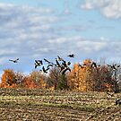 Passing Over The Corn Field by Deborah  Benoit