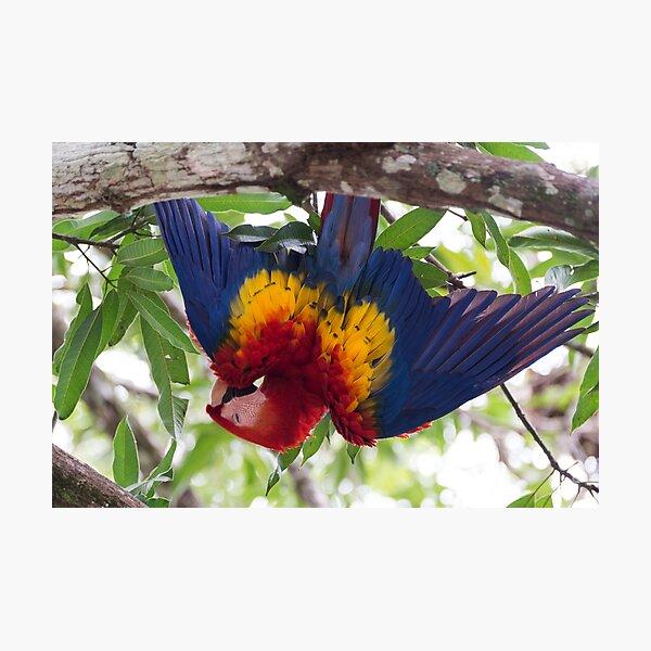 Upside-down Macaw Photographic Print