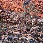 Simpson's Gap, Alice Springs by Roz McQuillan