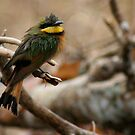 Little Bee Eater  by James Parker