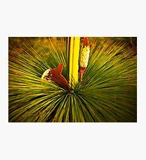 Xanthoria australis Photographic Print