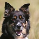 Gelert - A Welsh Sheepdog by Rory Trappe