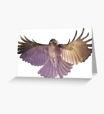 Rufous Whistler in flight Greeting Card