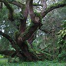 Tree Study by James McCarthy
