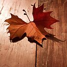 Autumn Leaf by Alex  Bramwell