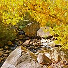 AUTUMN TREE LEANING OVER THE RIVER by Elaine Bawden