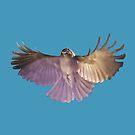 Rufous Whistler in flight by David Fraser