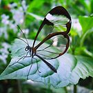 Cool As Glass by Dawn B Davies-McIninch