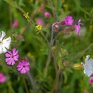 Wildflowers by the Roadside by Jim Key