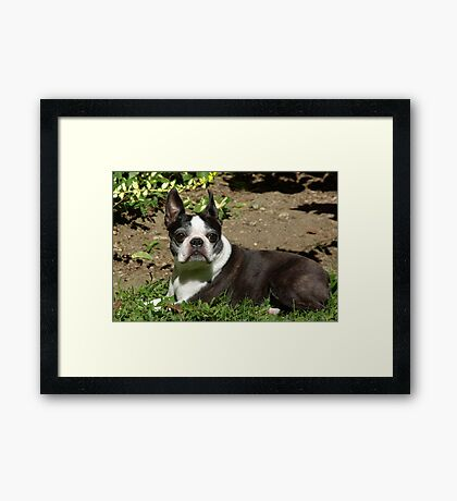 Restin' in the Sun Framed Print