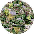 Scottish Autumn Colour Garden by SiobhanFraser
