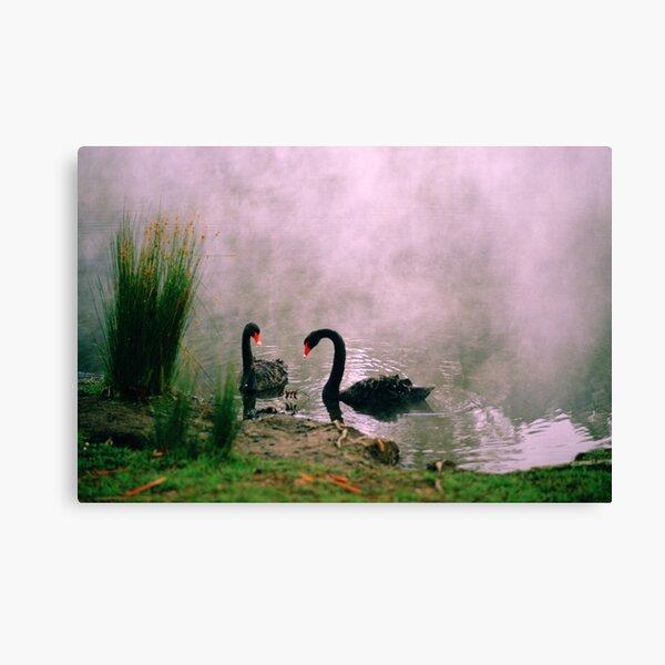 Swans,Daylesford Canvas Print