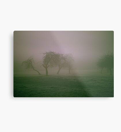 Morning Frost and Fog Metal Print