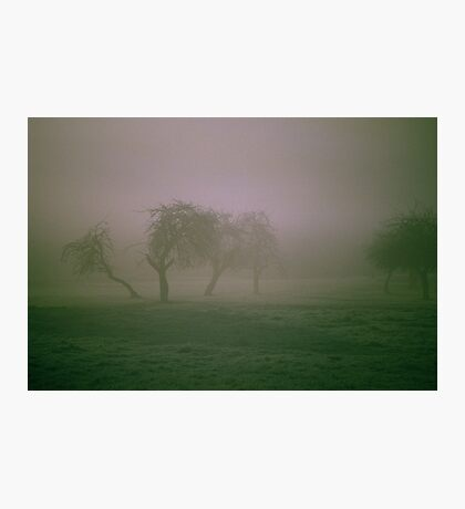 Morning Frost and Fog Photographic Print