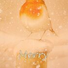 Merry Christmas Robin by ©The Creative  Minds