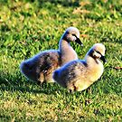 Two Little Signets by Jenelle  Irvine