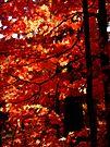 Autumn Impressions 2 by NatureGreeting Cards ©ccwri