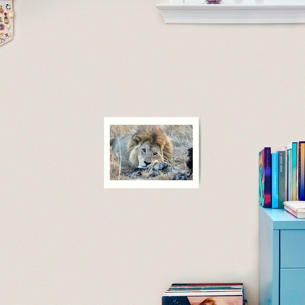 Male Lion - Serengeti Art Print