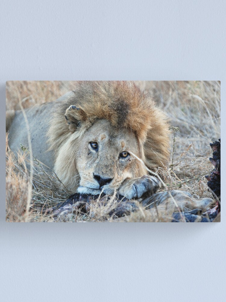 Alternate view of Male Lion - Serengeti Canvas Print