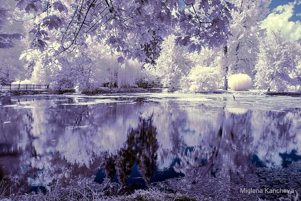 Lake in the Park by Miglena Kancheva