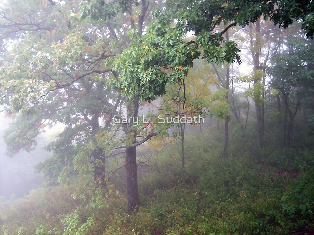 Foggy Shenandoah Mountain Top by Gary L   Suddath