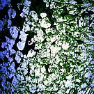 Moss-Tainted White with Blue Light by Wayne Gerard Trotman
