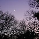 Crescent Moon with purple sky by William Sanford