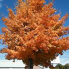 If The Color Of This Tree Were by raindancerwoman