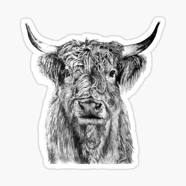 Scottish Highland Cow Sticker