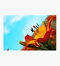 Garden Lily 3 Photographic Print