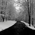 Winter Afternoon by Jaime Hernandez