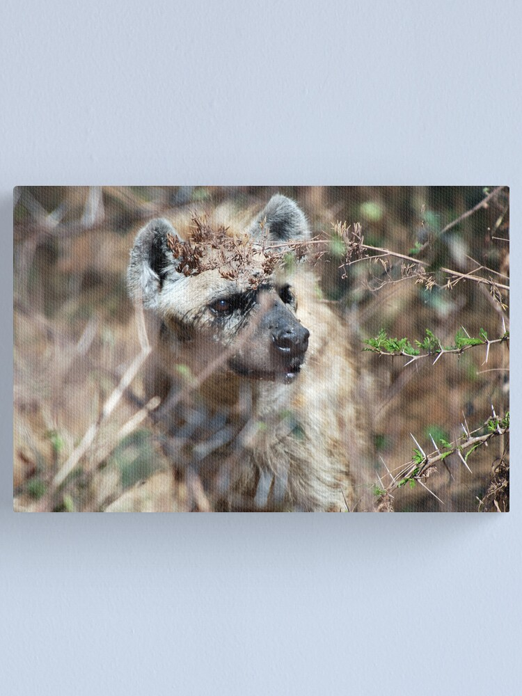 Alternate view of Spotted Hyena - Ngorongoro Crater Canvas Print
