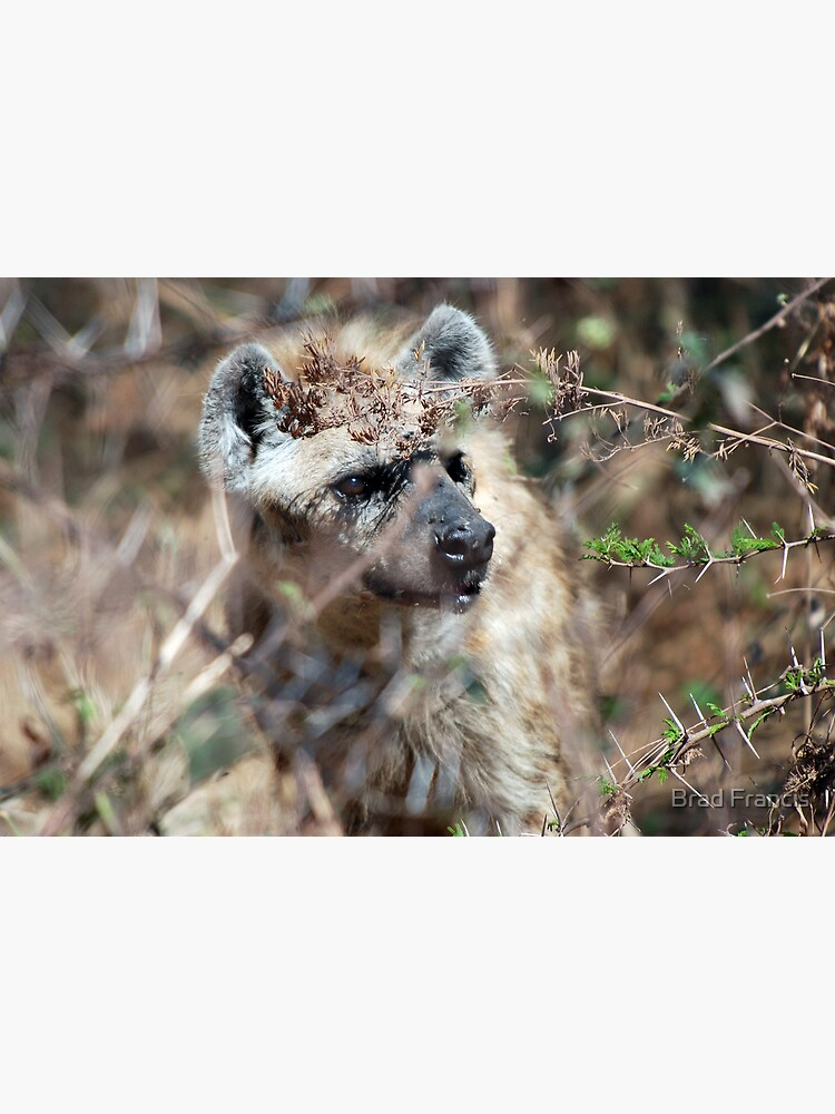 Spotted Hyena - Ngorongoro Crater by bfra