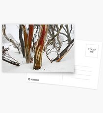 Colourful snow gums, Perisher Valley NSW Postcards