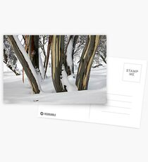 Snowgums, Perisher Valley NSW Postcards