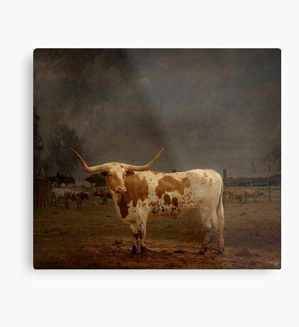 Texas Long Horn Metal Print