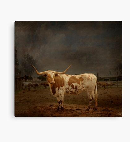 Texas Long Horn Canvas Print