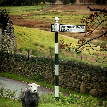 Lost Sheep, Lake District, England by mhowellsmead