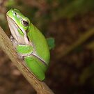 green tree frog by Edyta Magdalena Pelc