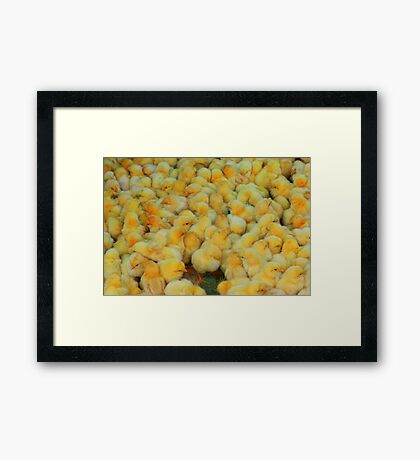 Market Series - Don't count your chickens... Framed Print