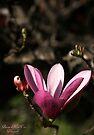 Blossoming Beauty by Briana McNair